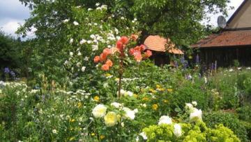 Flora rund um Gspannberg