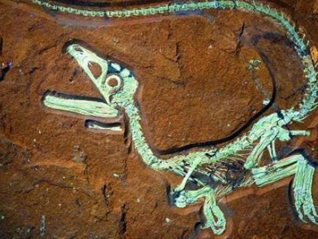 Sensationsfund Saurier- Fossilienfund in Kelheim