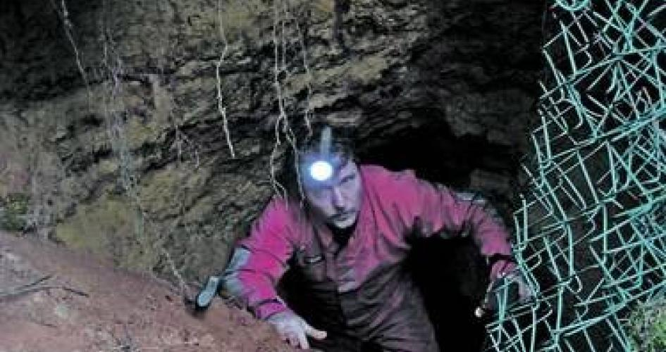 Höhlen, Stollen, Keller: Forscher untersuchen Waldgebiet